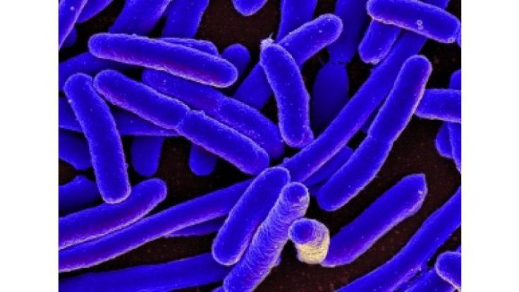 AP 2720 Mikroorganizma Kontrol Ürünü